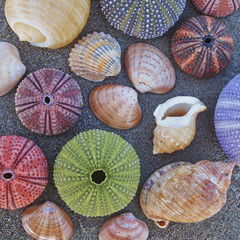 variety of colorful seaurchins and shells on wet sand beach
