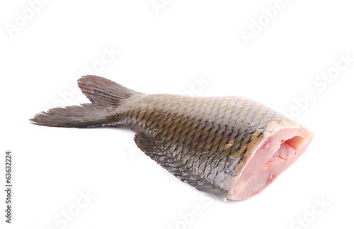 Closeup of carp fish tail.