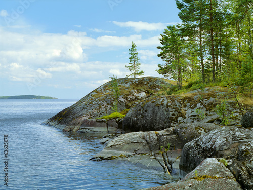 Small pines on the stone shore of Ladoga lake