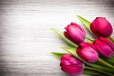 Fotoroleta Tulip.