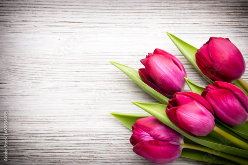 canvas print picture Tulip.