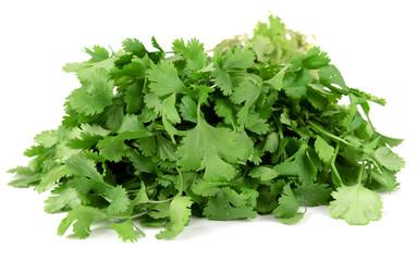 Fresh cilantro isolated on white