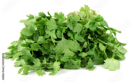 Fresh cilantro isolated on white