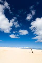 Henty Sand Dunes Tasmania