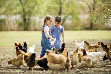 Two little girls feeding chickens