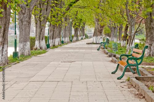 Poster Landschappen long tree alley