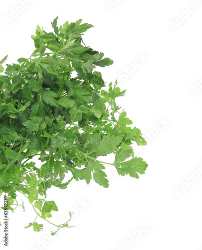 Branch of fresh parsley close-up.