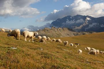 Pecore al pascolo in montagna