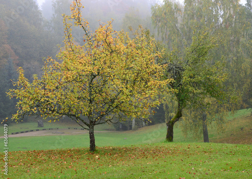 Tree with yellow leaves. Autumn scene.