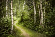 Ścieżka w zielonym lesie latem