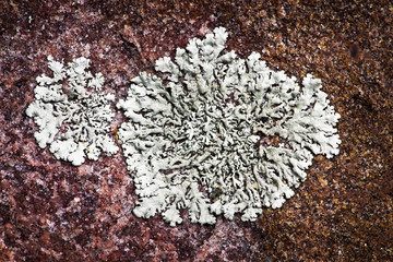 Lichen growing on rock