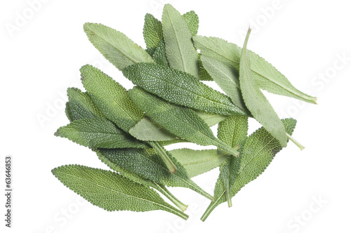 Black sage leaves