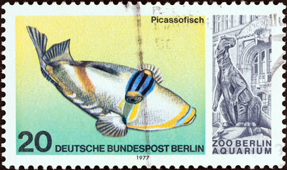 Picasso Triggerfish (West Berlin 1977)