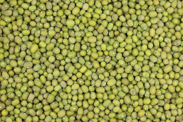 millet seeds green abstract background