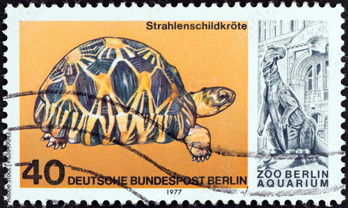 Radiated tortoise, Astrochelys radiata (West Berlin 1977)