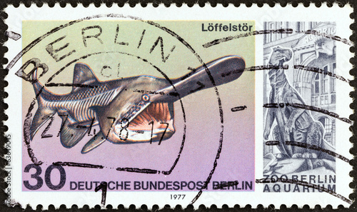 Paddlefish (West Berlin 1977)