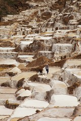 Local People working on Salt ponds, Maras, Peru, South america