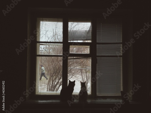 Cats looking at window on tha street