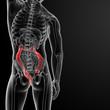 ������, ������: large intestine