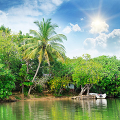 river and tropical plants on the coast