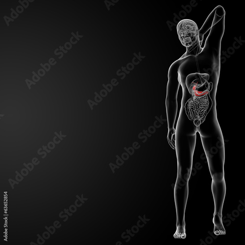 3d render illustration of the male Pancreas and Gallbladder