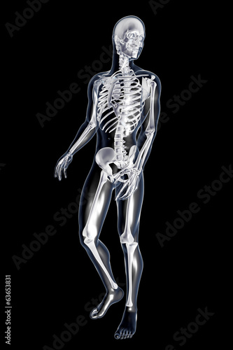 canvas print picture Anatomie