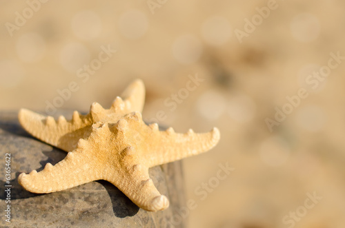 Starfish on the beach close up