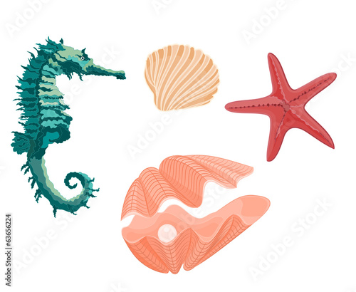 Collection marine life seahorse starfish and seashells