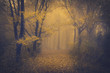 Mysterious foggy forest with a fairytale look - 63658697