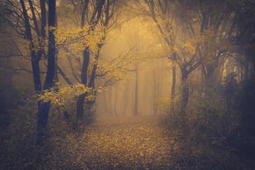 Tajemniczy Las mglisty z bajkowy wygląd
