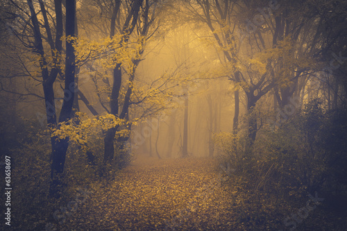 Poster Bossen Mysterious foggy forest with a fairytale look