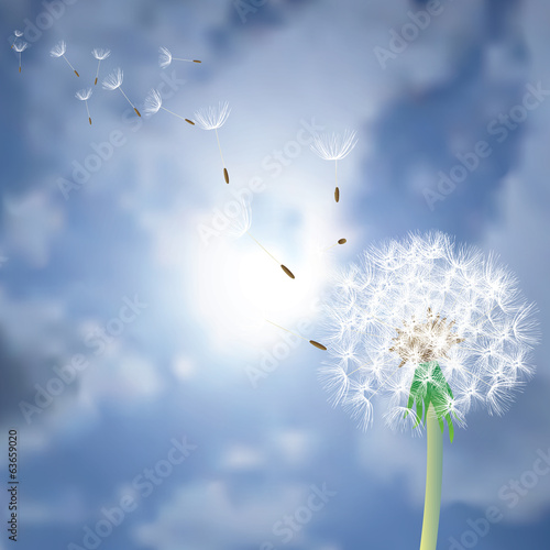 dandelion on sun