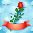 Red rose on sky background