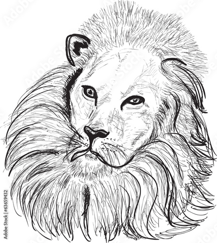 lion head sketch on white