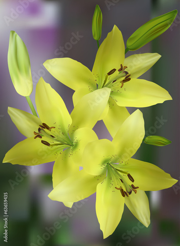 bunch of yellow lily flowers on green background