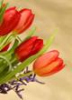 Rote Tulpen auf dem goldenem Hintergrund