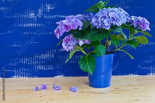canvas print picture Hortensien vor blauer Wand