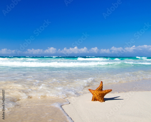 starfish with ocean
