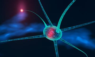neuronal cell