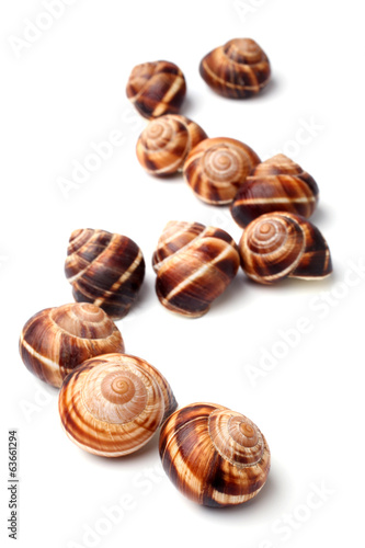 Edible snails (escargot)