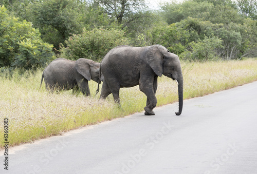 big elephant with yung  in kruger park