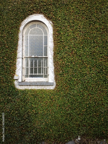 vintage window on an ivy covered wall