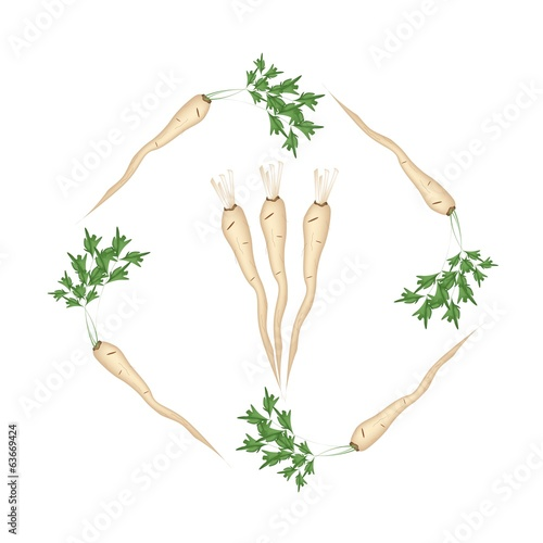 Fresh Green Parsley Roots on White Background