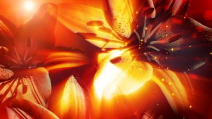 lilies, loop