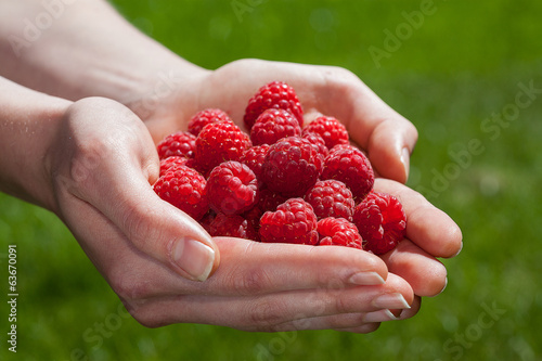 Raspberries in hand