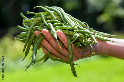 String beans - 63670210