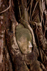 Thailand - Buddha  head in the  roots
