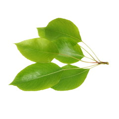 Green leaf pear isolated on white background