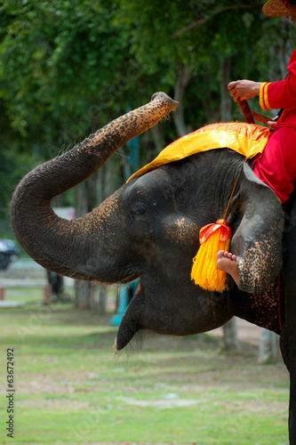 canvas print picture Thailand -elephant in Ayutthaya historical park