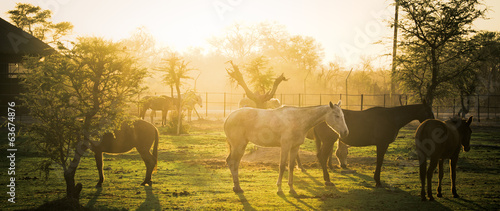 Leinwandbild Motiv Early Morning Ranch